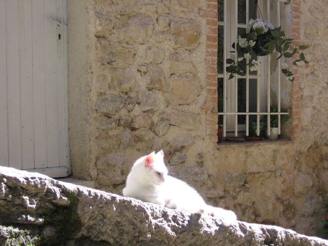 Chat du Seillans