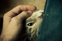 Weekend Writing Warriors ~ Cat ScratchFever
