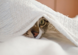 Weekend Writing Warriors ~ Under TheCovers